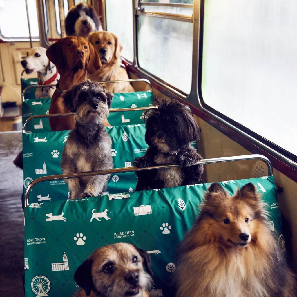 Провоз животных в автобусе